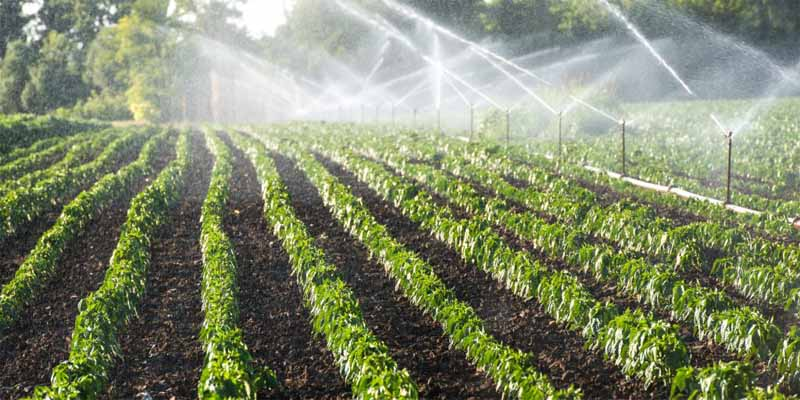 Irrigation Automation Acts as a Supervisor to Manage Irrigation